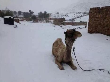 الجمال وتساقط الثلوج سيناء 2013 ديسمبر